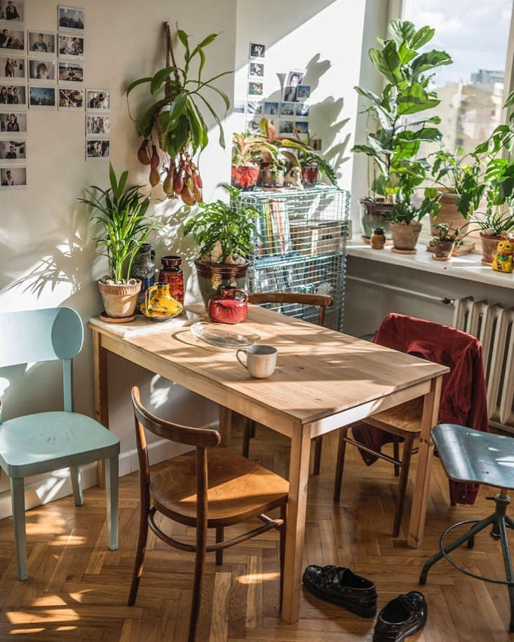 Beata and Remek live in a teeny tiny apartment but they don&#8\2\17;t let this stop them building an extensive houseplant collection.