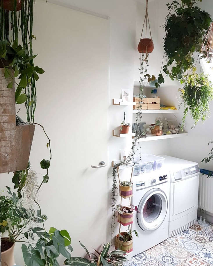 &#8\2\20;I love spending time in my laundry room, the plants make it a lovely place to stay,&#8\2\2\1; says Angela Rapisarda.