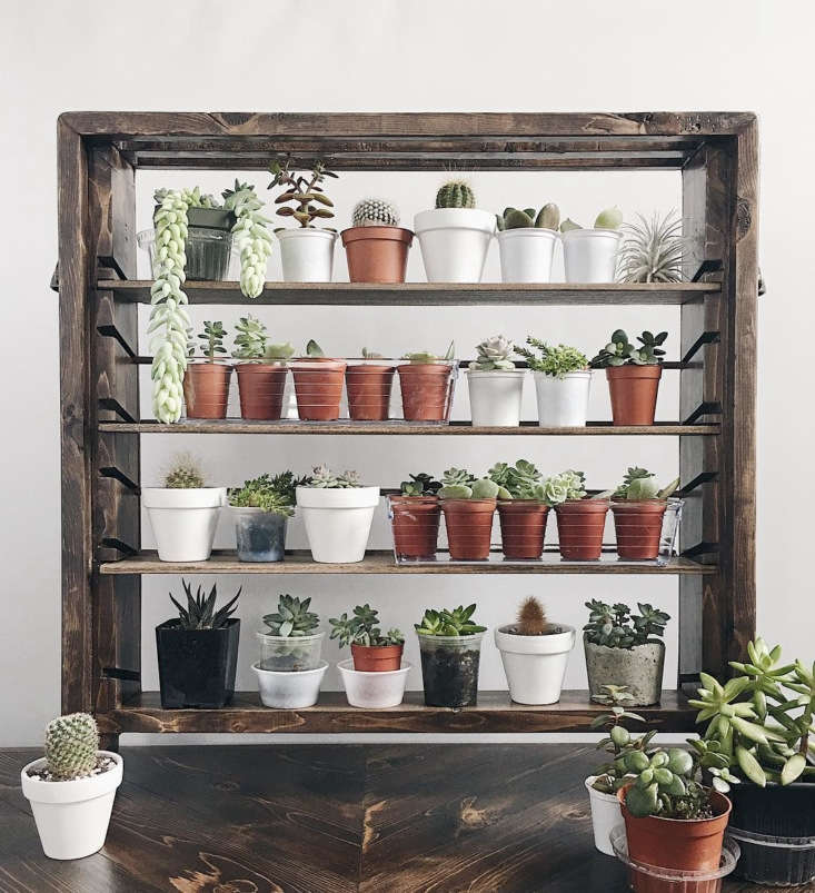 &#8\2\20;Current state of my propagation station (of sorts). Originally made to house my littlest of plant experiments, this miniature #shelfie has overtime evolved into a plant-baby hotel,&#8\2\2\1; says @melissamlo.