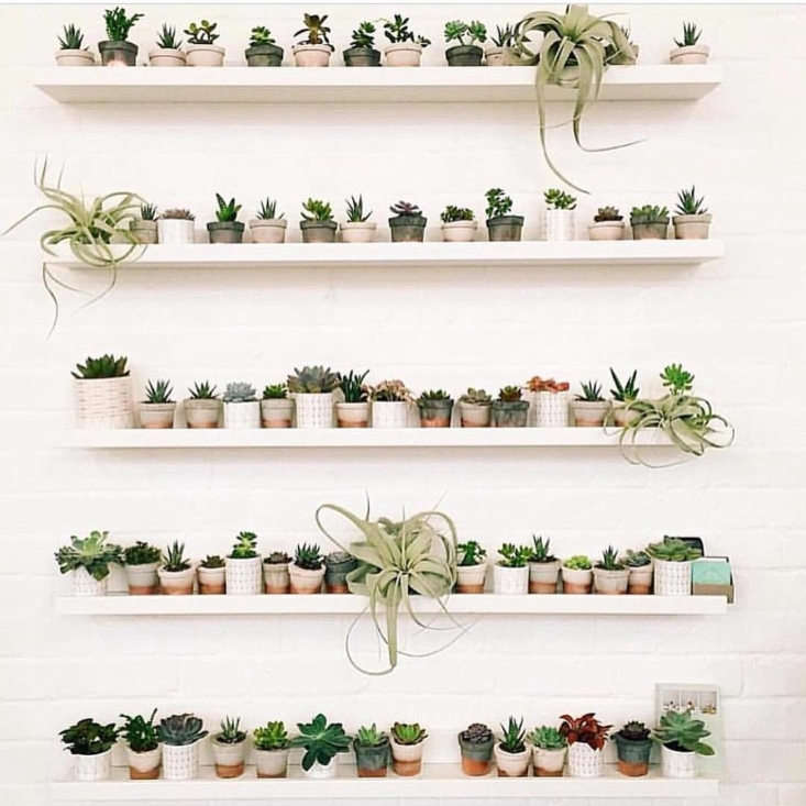 Shelfie envy, inspired by UK-based stylists @geo_fleur (shop their air-purifying collection at Geo-Fleur).
