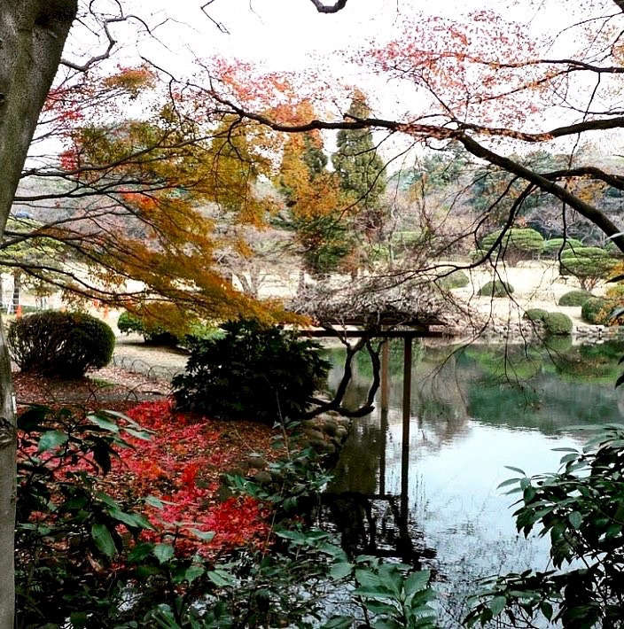 Foliage can create colorful layers in a landscape, as evidenced by the Japanese maples in this Tokyo garden, captured by designers @roman_and_williams_.