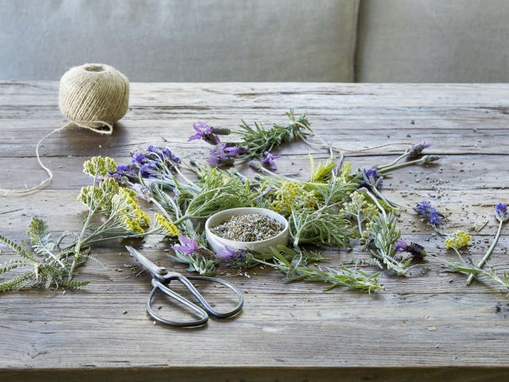 Loves me, loves me not, (clearly) loves me. Read more about flowering lavender inEverything You Need to Know About Lavender (Plus 5 Kinds to Grow).