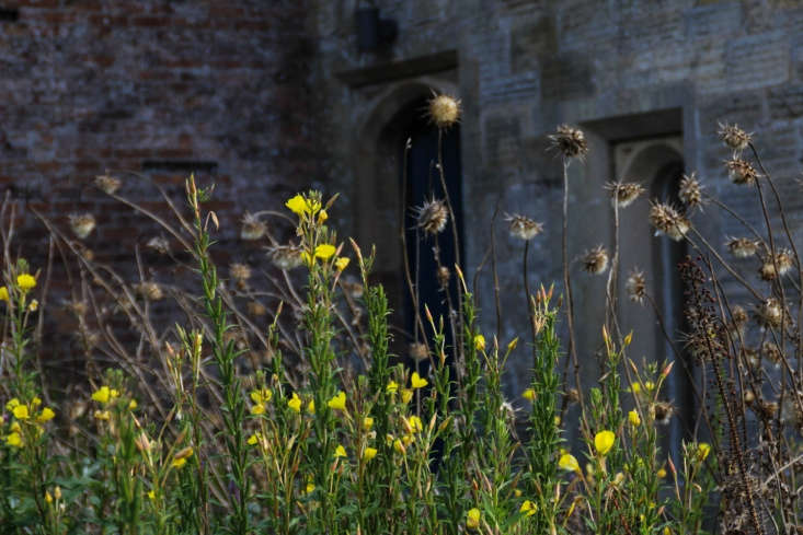 Evening primroses and seed heads light up against the quasi-feudal, ultra-regal walls.