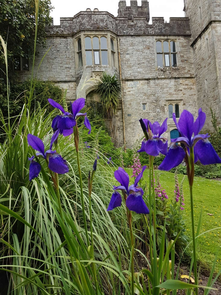Beardless irises in late spring.