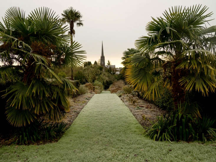 Ireland has a famously warm climate for subtropical plants.