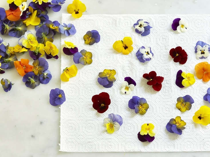 Rinse fresh flowers and herbs and allow them to dry before brewing tisanes.