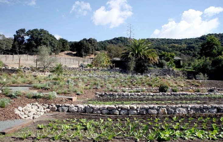 &#8\2\20;We extended the existing stacked rock walls on site to almost touch the hacienda,&#8\2\2\1; Godshall says. Santa Rosa–based Manuel Fernandez Landscape oversaw landscape construction and planting.