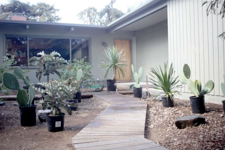 The team set out plants in nursery pots to see how they looked next to one another and moved them around until all the succulents and cacti had found natural homes.