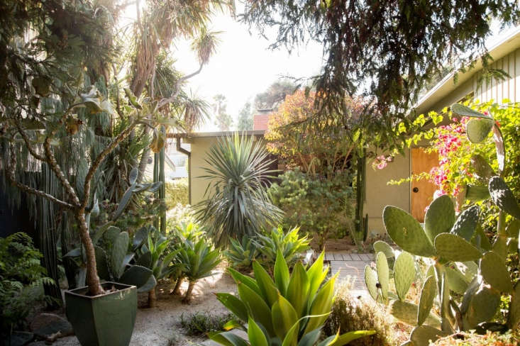 Specimen plants include, from left, a potted Kalanchoe beharensis, a Dracaena draco (in the background behind low-growing agaves, and prickly pear cacti.