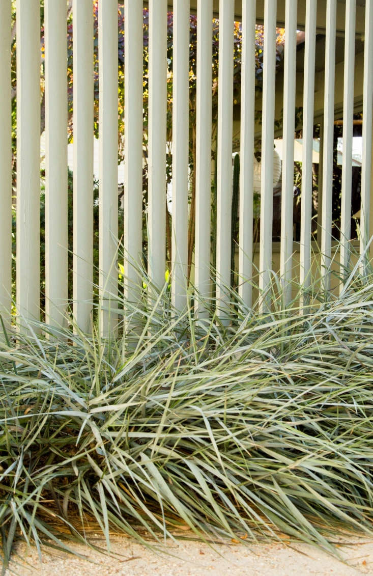 Clumps of wild rye grass (Leymus condensatus&#8\2\16;Canyon Prince&#8\2\17;) native to California undercut the formality of the louvered screen.