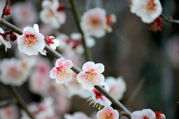 Photograph by Tanakawho via Flickr.