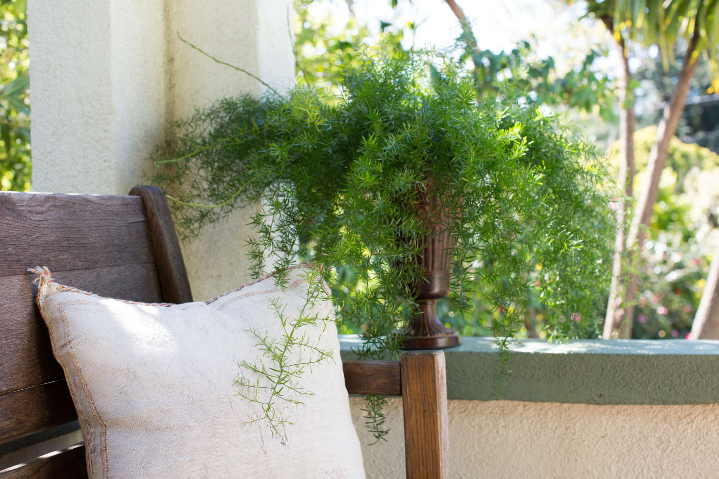 An asparagus fern enjoys dappled light on a front porch. See more growing tips in Asparagus Ferns: A Field Guide to Planting, Care & Design.