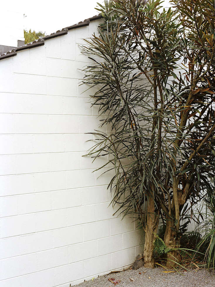 A single shrub that knows how to take care of itself grows against the facade at the Ballantyne House in New Zealand. Photograph byMary Gaudin.