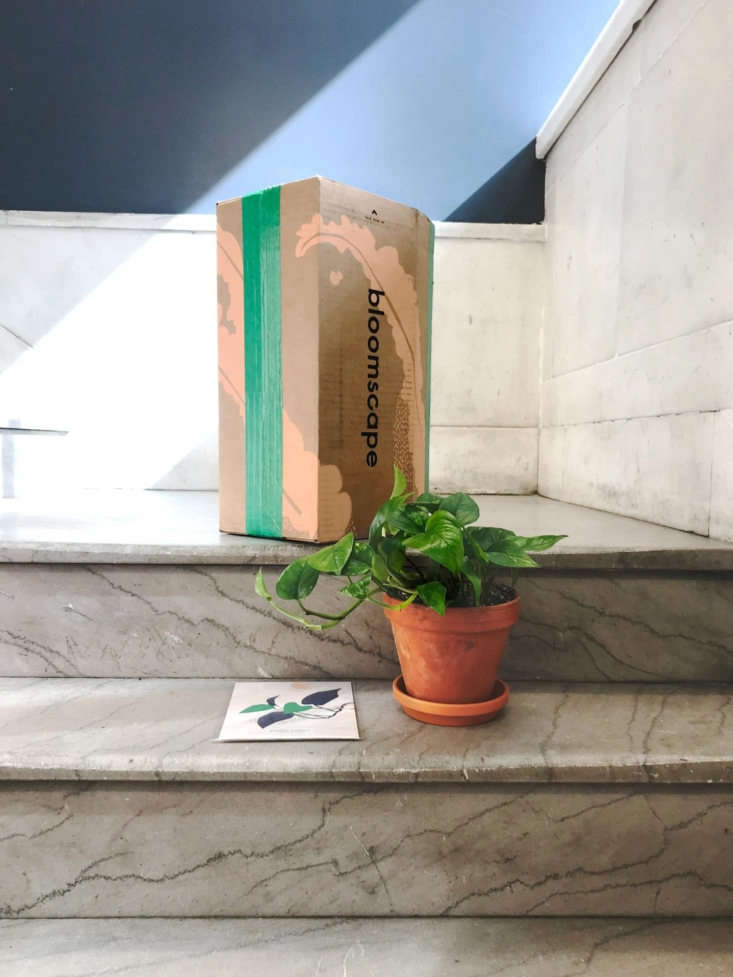 Plants arrive in cardboard packaging that Mast developed using his family&#8