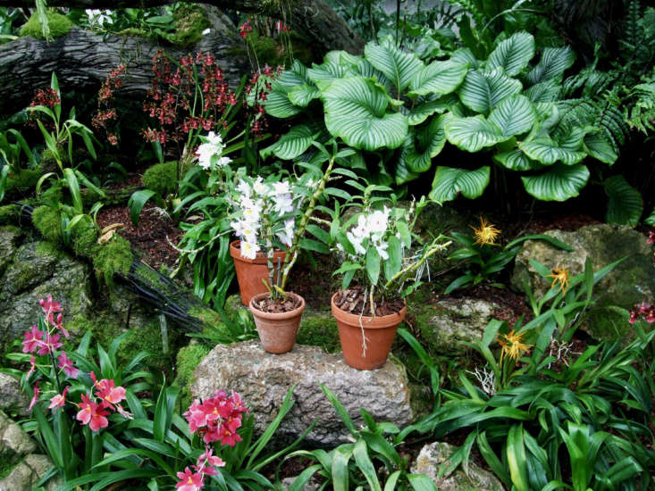 A collection of Dendobrium orchids in the Princess of Wales conservatory. Photograph by Jim Linwood via Flickr.