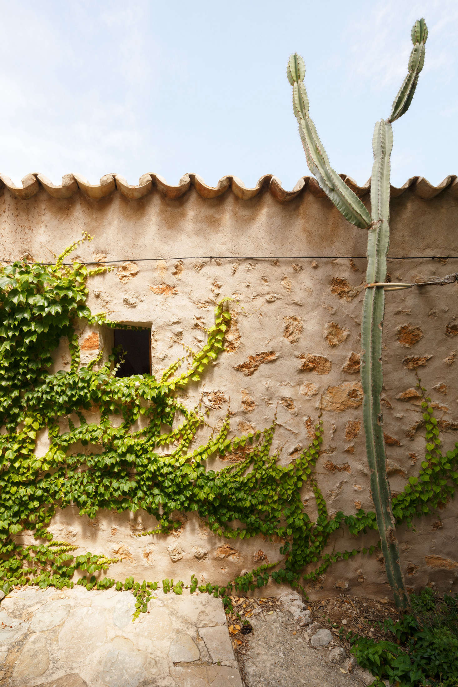 Here, vines give the illusion that the old house is being overtaken by the wild Mallorcan botany.