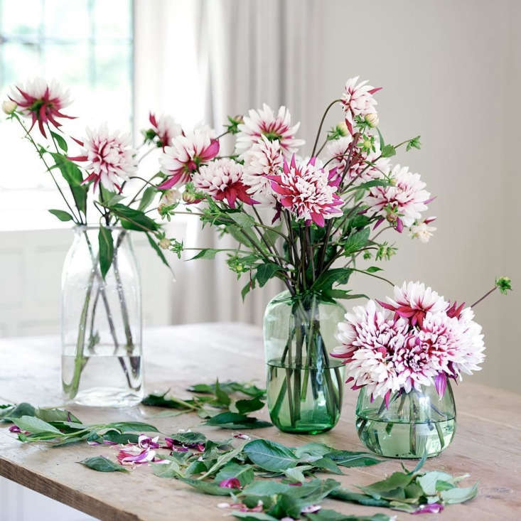Dahlias from the cutting garden. &#8\2\20;I love the imperfections and jaunty angles of these flowers. And although some of the stems are short, a mixed height of vases ensures none are wasted,&#8\2\2\1; says Craddock.