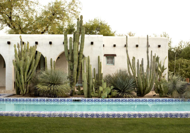 """Salvaged native Mexican fence post cacti (Pachycereus marginatus) grow against the serene backdrop of whitewashed walls of a 90-year-old adobe house in Paradise Valley, Arizona. Native desert plants """"mediate"""" between the historic building and a modern lap pool in a garden by Phoenix-based landscape architectSteve Martino. See more in  Ideas to Steal from Desert Gardens."""