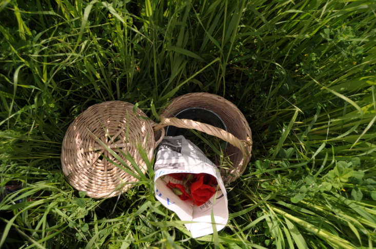 When you forage for poppies, bring a basket with a bucket of water and a newspaper. As soon as you cut the flowers, wrap them in thin newspaper to protect them from wind and sun—and place them in the bucket of water.