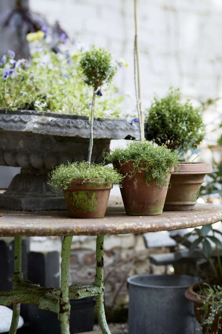 Rosemary topiaries. Photograph by Anna Williams, from Garden Visit: The Red Chair Hudson, NY.