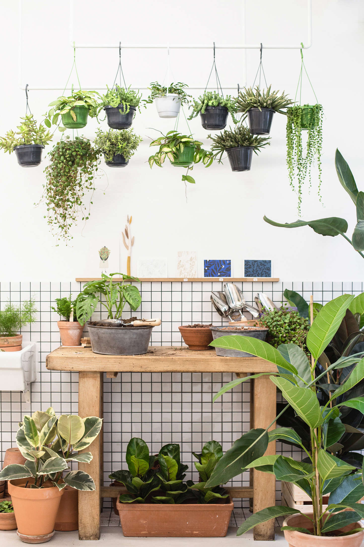 On offer are vigorous specimens of succulents including a handsome, trailing string of pearls (Senecio rowleyanus) at right; variegated pothos vines (at center), and baby fiddle-leaf-fig trees (in a terracotta planter beneath the potting bench).