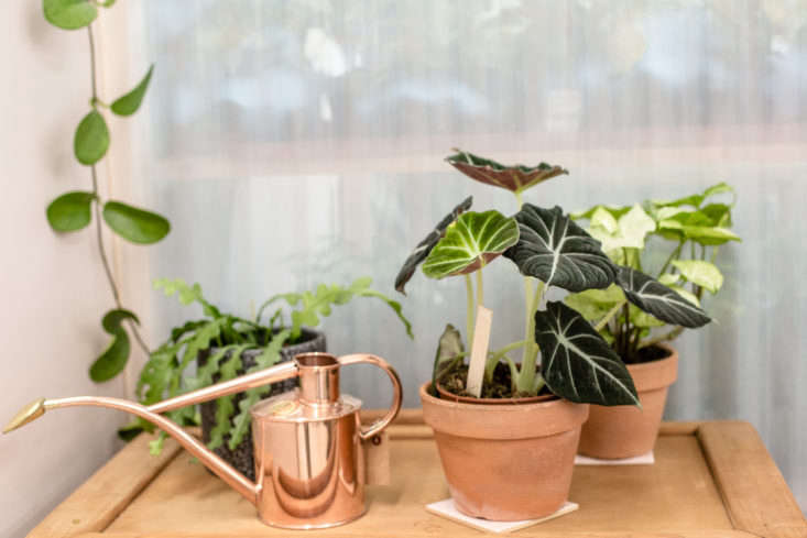 A small copper watering can from UK-based Haws has a long-reach spigot.
