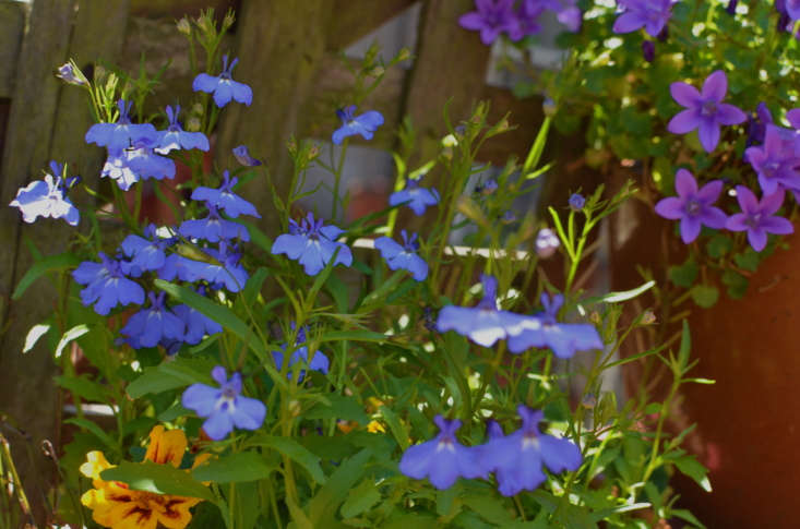 Saturated spring colors, courtesy of lobelia. Photograph by Ernest McCray Jr. via Flickr.
