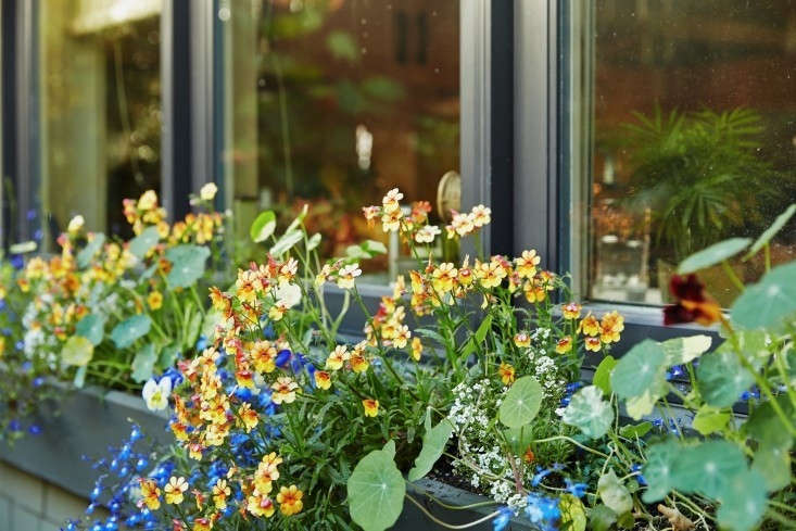 Delicate trailing lobelia spills out of a window box. See more in Garden Visit: The Hobbit Land Next Door. Photograph by Tom Kubik.