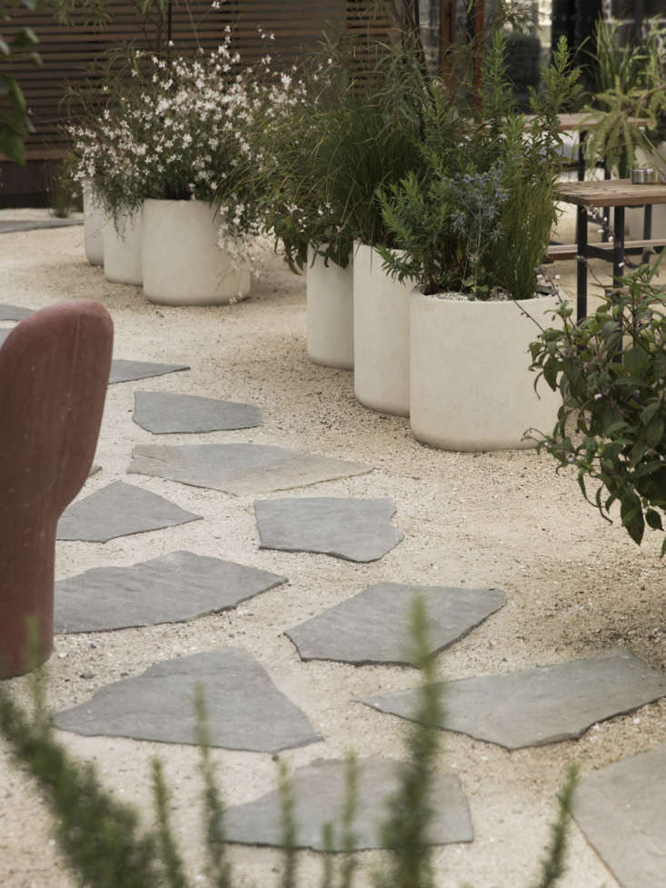 The row of white concrete pots are planted with Sophora chathamica (a native coastal Kowhai tree), Salvia &#8