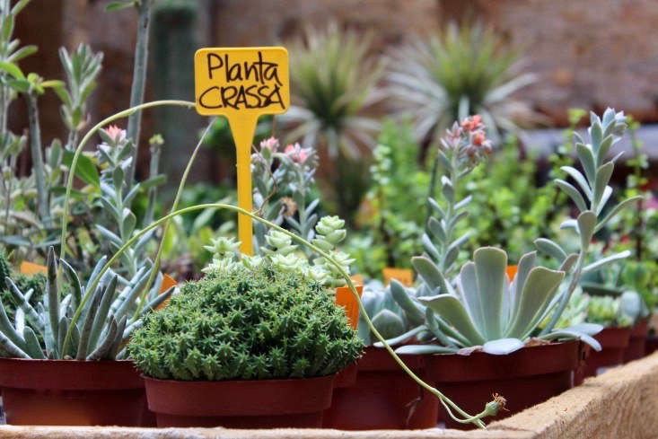 A plant tag at Hivernacle in Barcelona. See more in Shopper&#8