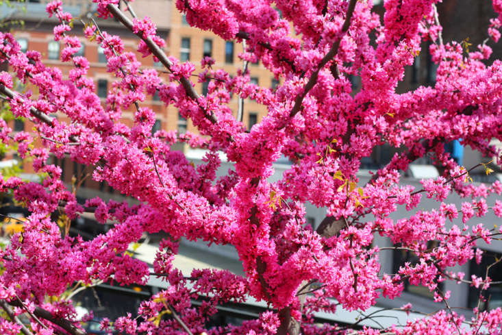 One cultivar offers eye-poppingly neon pink blossoms: &#8\2\16;Appalachian Red&#8\2\17; is not exactly red.