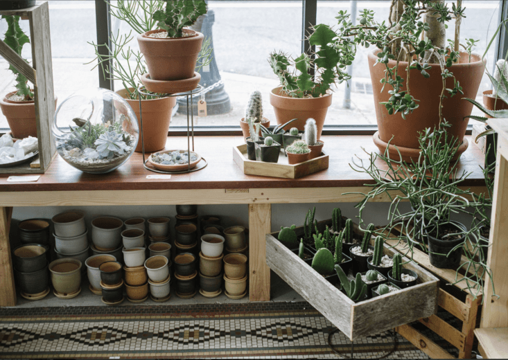 One of our favorite plant shops in Portland, Oregon. See more at Shopper's Diary: A Drugstore-Vintage Vibe at Solabee Flowers in Portland. Photograph courtesy of Solabee.