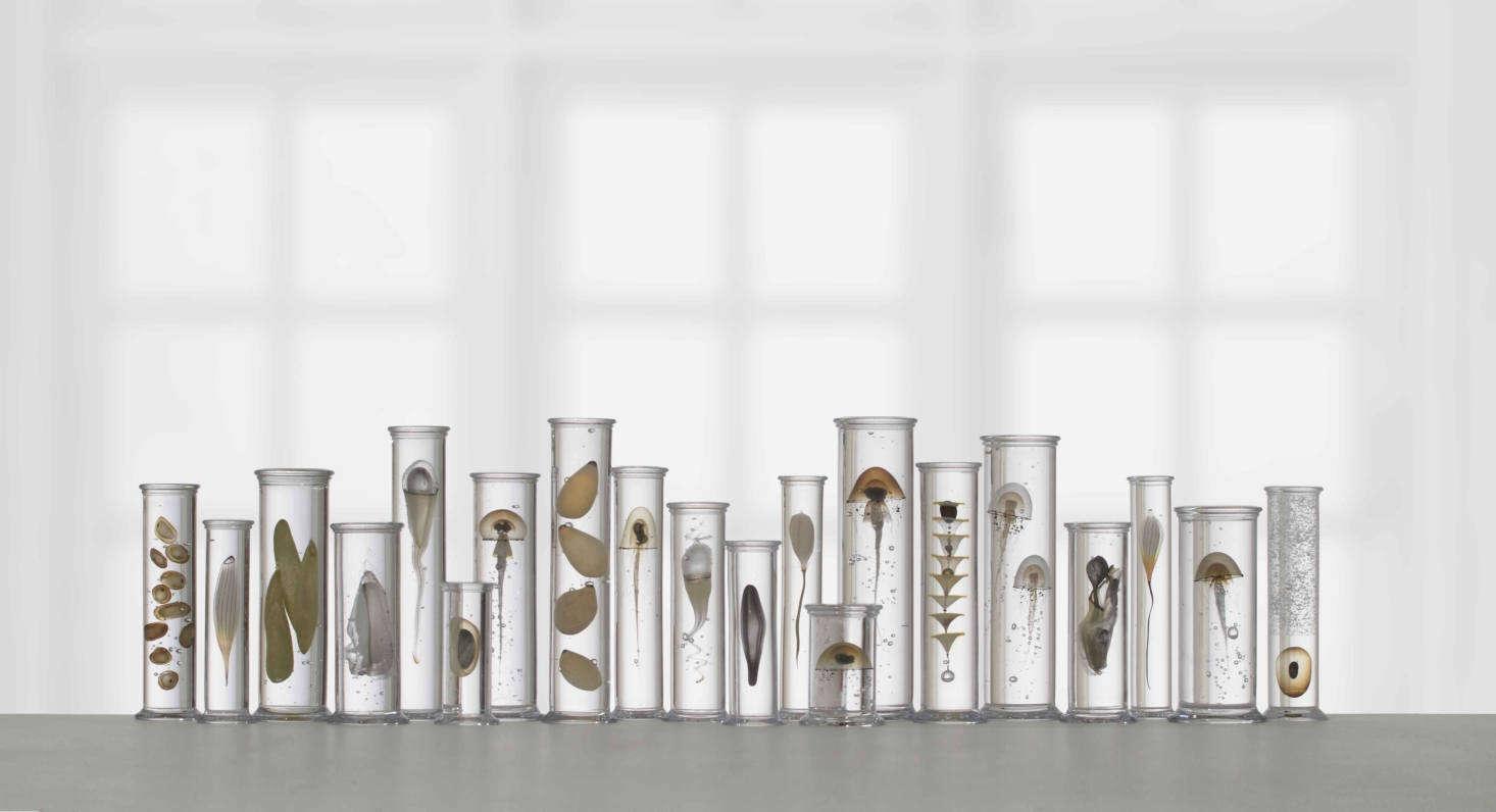 Dam names his test-tube ensembles things like &#8