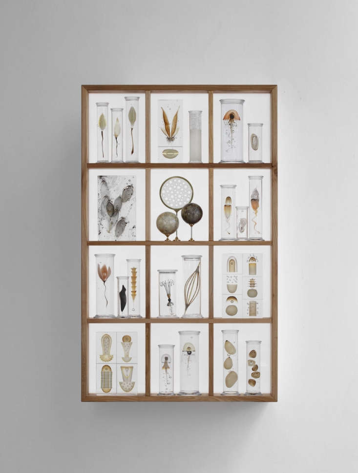 Dam&#8\2\17;s backlitCabinet of Curiosities series is his own version of Wunderkammer, the \16th-centurycollectors&#8\2\17; assemblages of natural specimens that Heller Gallery describes as &#8\2\20;precursors to museums.&#8\2\2\1;