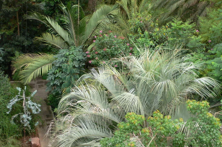 Tropical plants in the Temperate House at Kew. Photograph by Heather Cowper via Flickr.