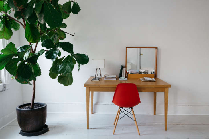In an upstairs guest room/office in a Brooklyn townhouse, a large Fiddle-Leaf Fig Tree assists a red chair in adding color and pattern to an otherwise monochromatic room. Photograph by Brian Ferry, styling by Alexa Hotz.