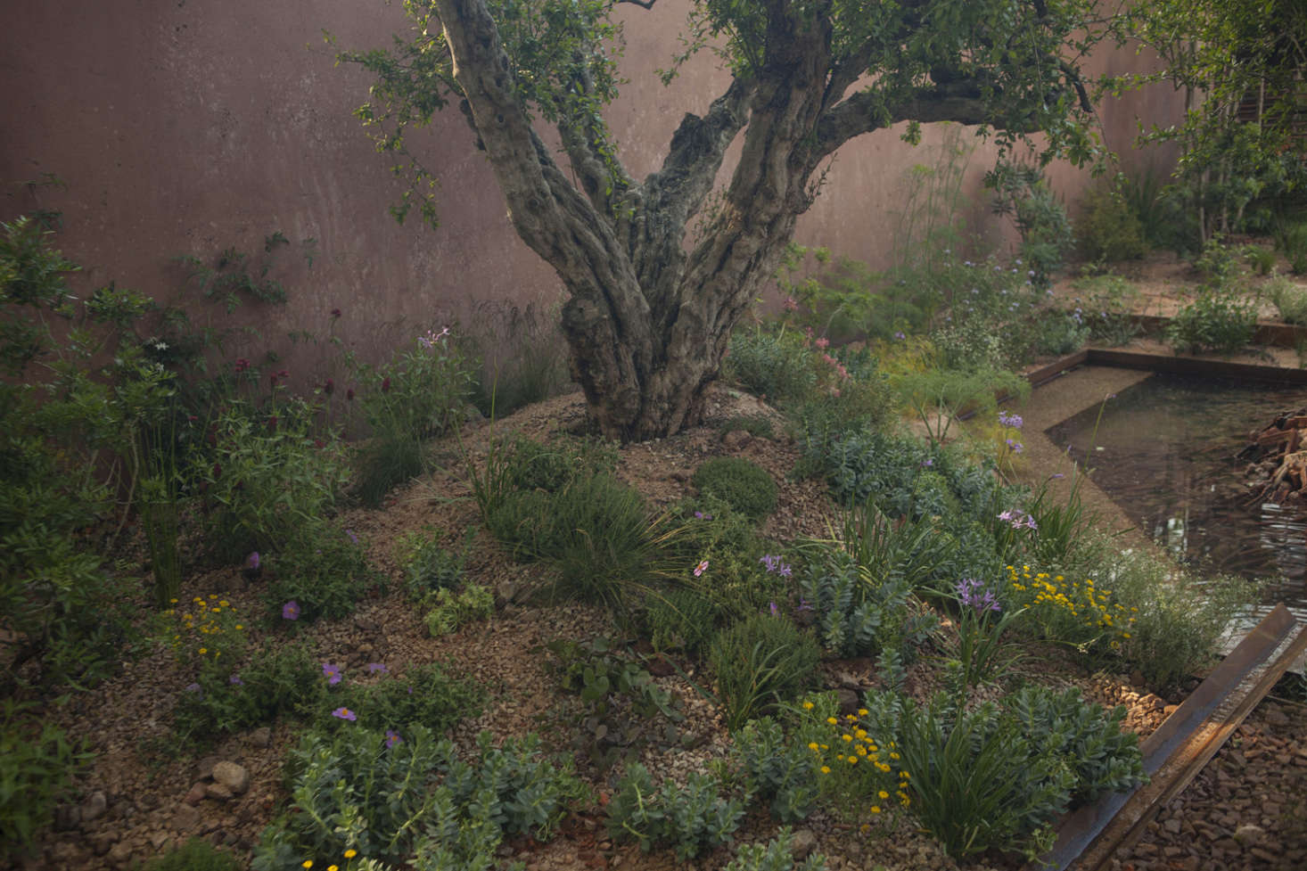 An established pomegranate tree in Sarah Price&#8