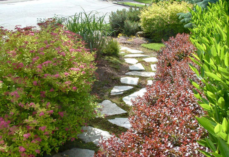 In a front garden, plants edging a path of paver stones include Berberis thunbergii&#8