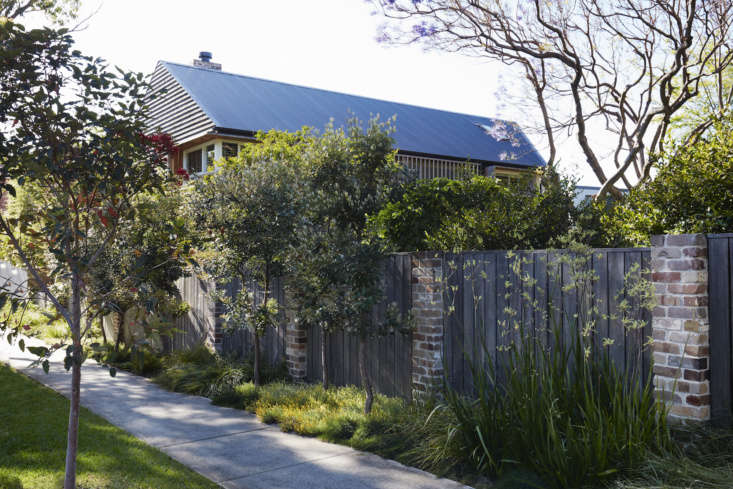 Dangar set the front fence back from the sidewalk by a few feet and planted Australian native grasses along it, to &#8