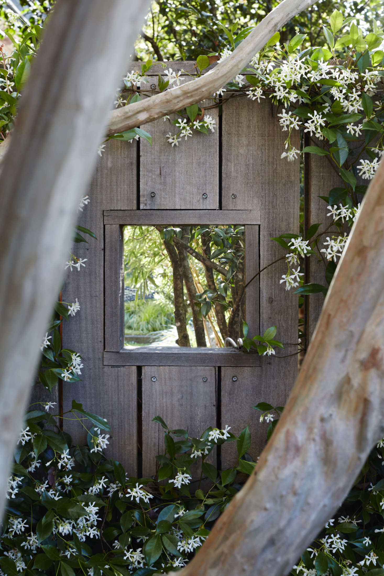 Star jasmine frames a square peep-hole cut into the rough-sawn Australian hardwood fence at the front of property, which gives passersby a glimpse into the garden.
