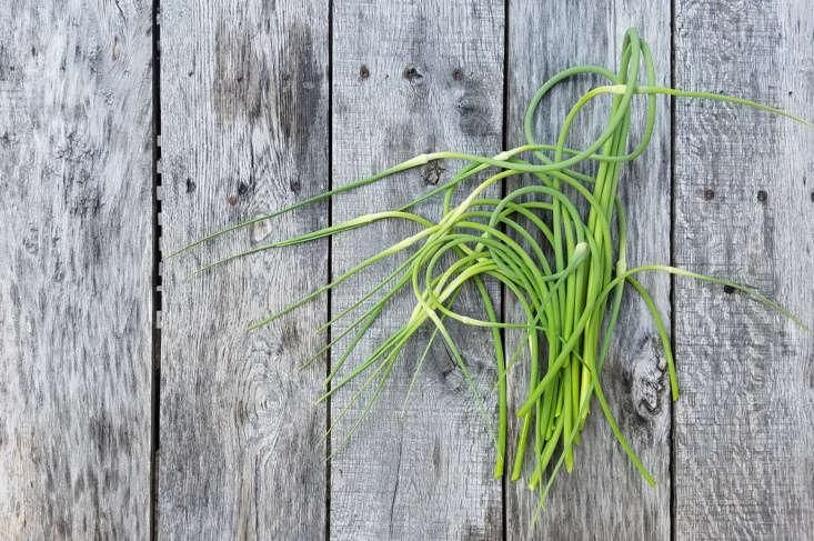 In early to mid summer you will begin to see the flowering stems forming. These are the delicious scapes, an excellent vegetable in their own right.
