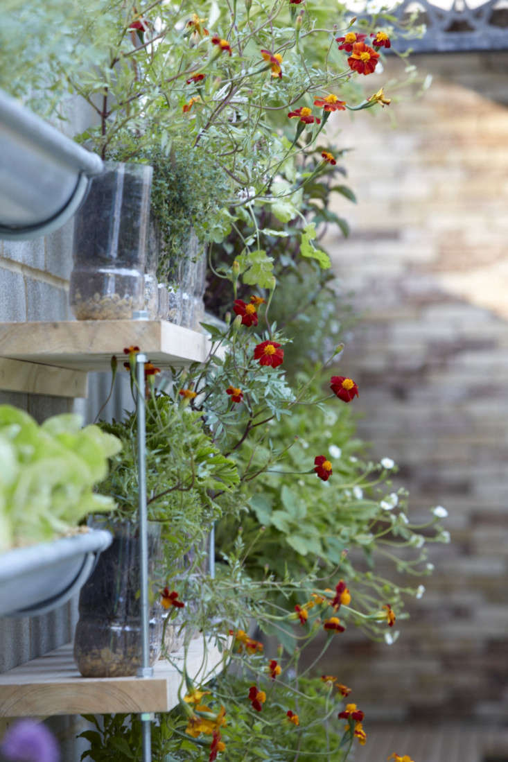 Plastic bottles and drainpipes support herbs and edibles (including Tagetes, thyme, and lettuce), just as they do at Domiz.