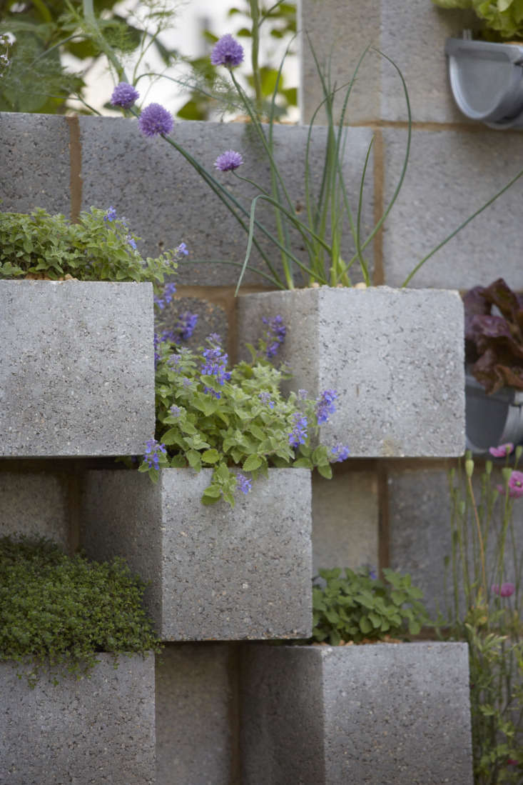 Appreciating breeze block. Set at an angle, concrete units contain thyme, catmint, fennel, and chives.