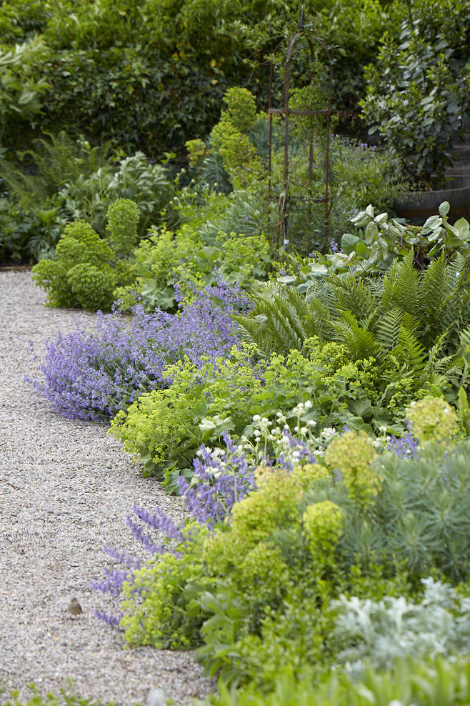 A gravel path&#8\2\17;s edge is softened by plantings that spill over into the walkway: ferns, euphorbia, and Alchemilla mollis. See more of this garden bed at Old-Lands: A Modern Welsh Garden from a Bygone Age. Photograph by Britt Willoughby Dyer.
