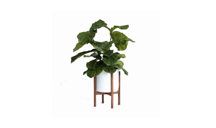 A ceramic Large Mid-Century Modern Planter and hardwood plant stand (also shown in the top photo of the post) are sold separately or as a set. The plant stand is $65; with a -inch ceramic planter, the set is $loading=
