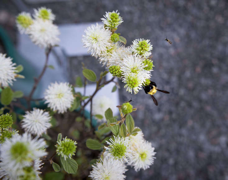 Native plants tend to attract pollinators. Photograph byJustine Handfor Gardenista, fromNasami Farms: A New England Mecca for Native Plant Lovers.