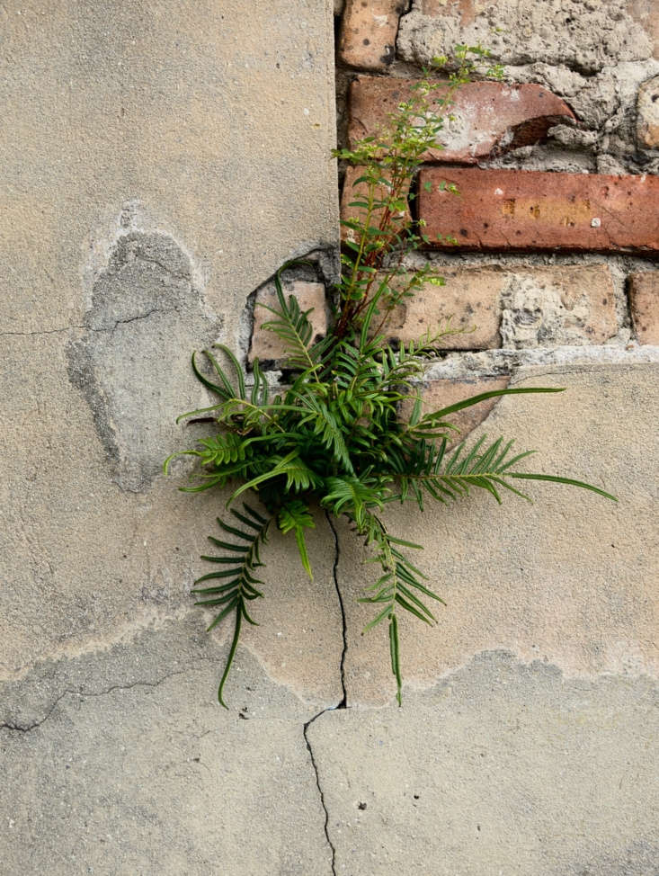 A vampire-chic fern grows in the cracks of a crypt at a New Orleans cemetery. Photograph by Takomabibelot via Flickr.