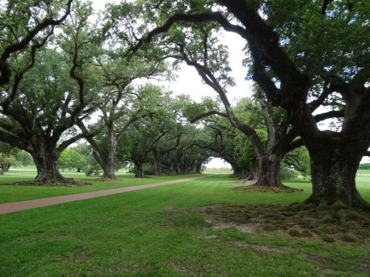 An 800-foot-long allée of 300-year-old live oak trees at Oak Alley Plantation in New Orleans. Photograph by Denisbin via Flickr.