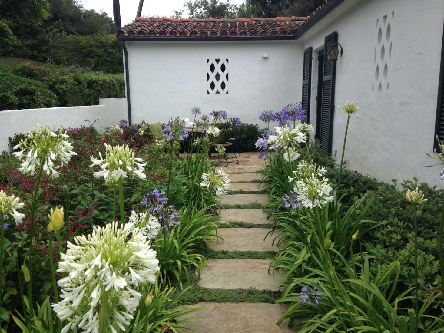 Tall Agapanthus (Lily of the Nile) adds some privacy to a tucked-away patio. Photograph courtesy of Roberto Sosa.