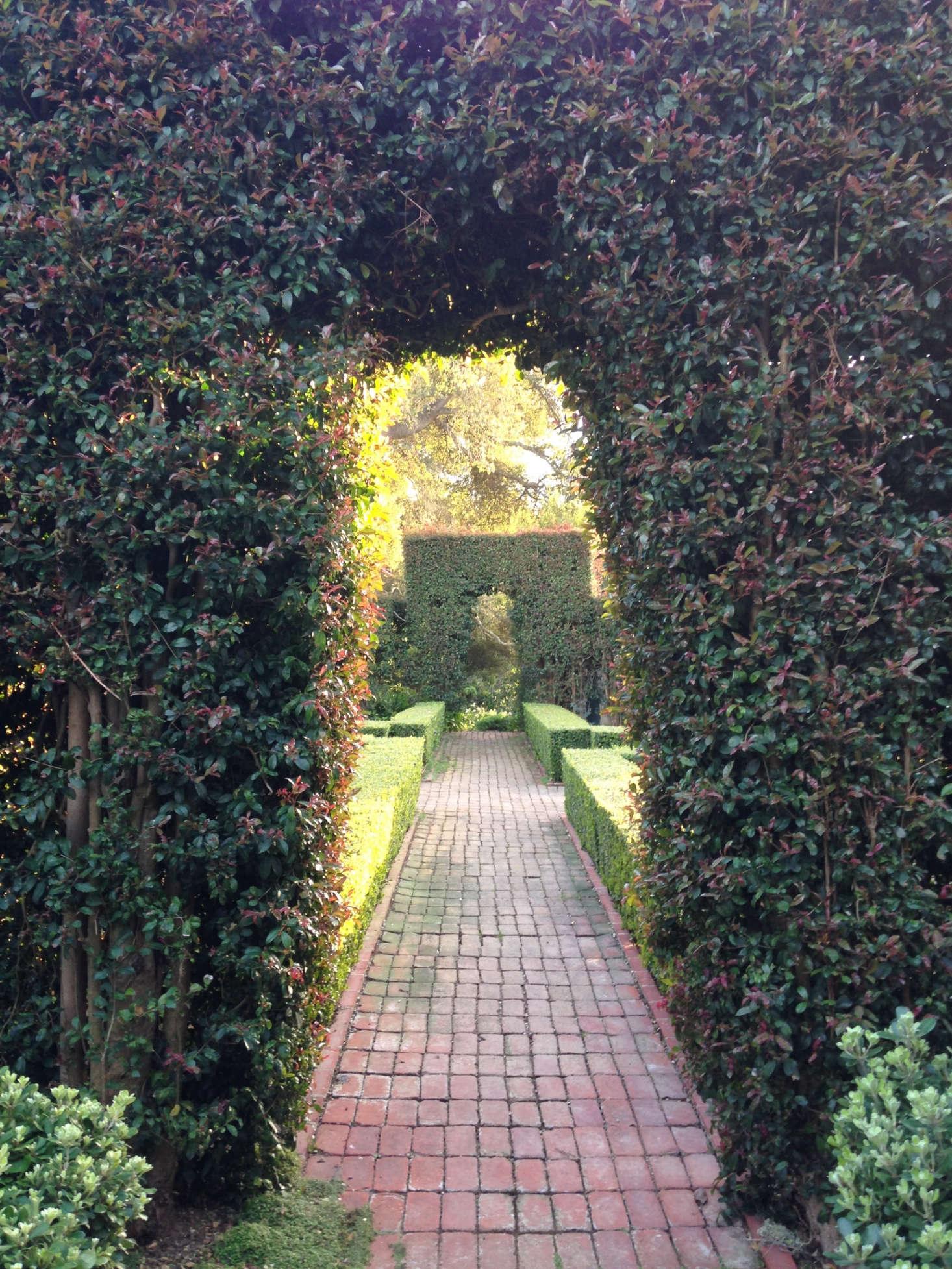 Deeper into the hedge maze. Photograph courtesy of Roberto Sosa.